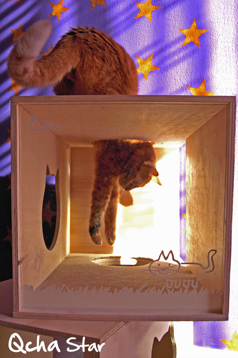 Gatti si nasce, designer si diventa: tre designer studiano elementi unici per i vostri felini! Qcha!