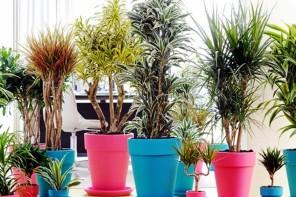 Piante da appartamento: migliorare la qualità della casa riducendo l'inquinamento