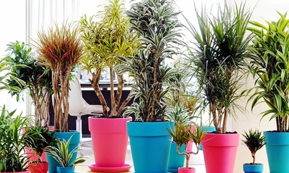 migliorare inquinamento indoor con le piante