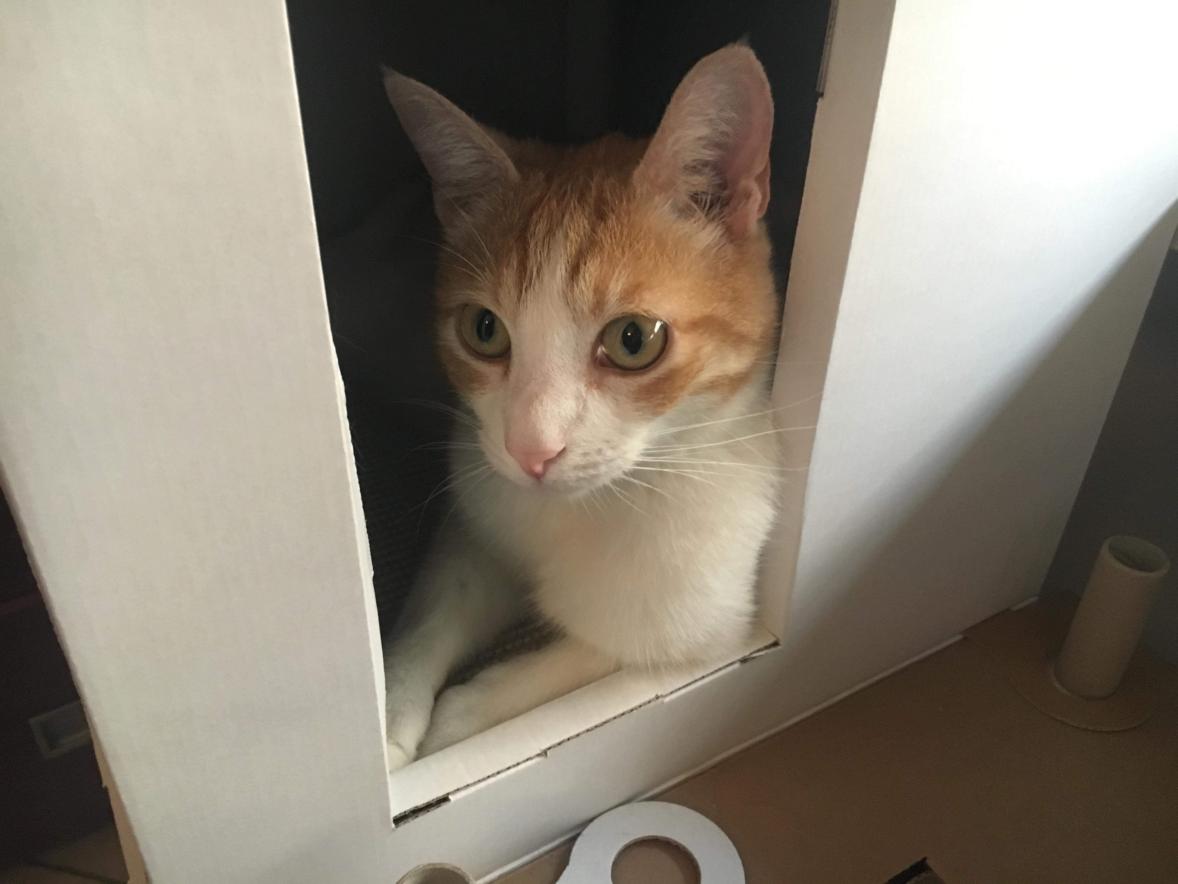 Archimiao! La cuccia ecologica perfetta per gatti