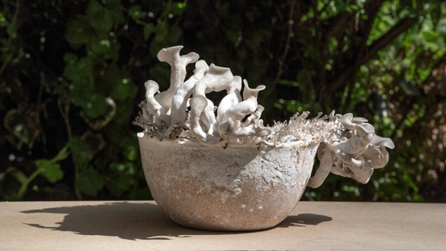 Da funghi a ciotole: l'alba di una rivoluzione biotecnologica
