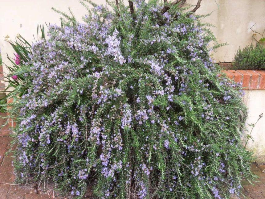 piante in vaso da esterno per arredamento