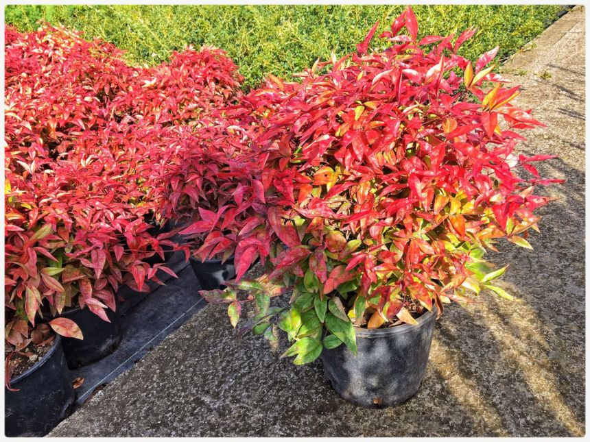 7 piante sempreverdi per arredare terrazzo
