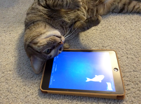 app gatto friskies