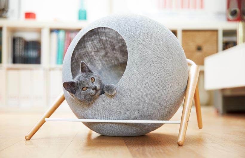 pet design _ cuccia