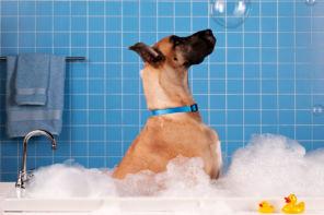 Vivere con il cane in casa è (anche) questione di design